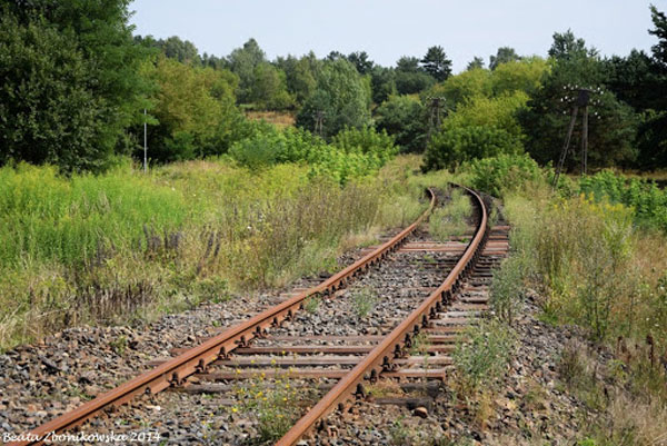 Abandoned railway track, overgrown, surrounded by a forest