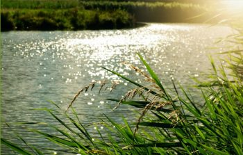 Sparking river with reeds