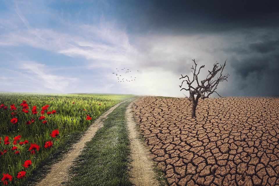 Fields - green and poppy once side, withered and dry cracked soil the other